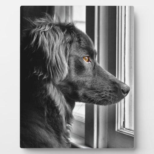 Perro negro placas para mostrar