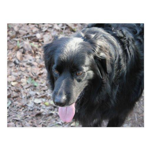 perro negro postales
