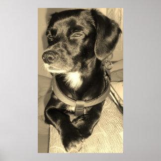 Perro negro póster