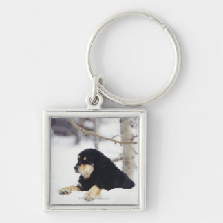 Perro negro que miente en nieve llavero personalizado