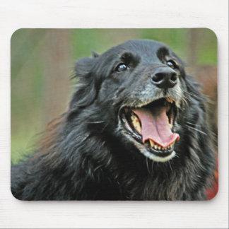 Perro negro sonriente en un fondo verde de Bokeh Alfombrillas De Ratones