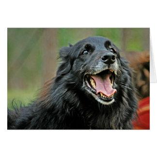 Perro negro sonriente en un fondo verde de Bokeh Tarjeta De Felicitación