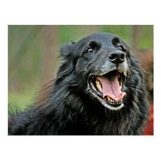 Perro negro sonriente en un fondo verde de Bokeh Tarjeta Postal