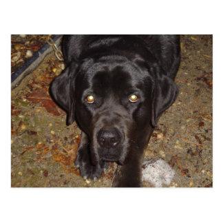 Perro negro tarjeta postal