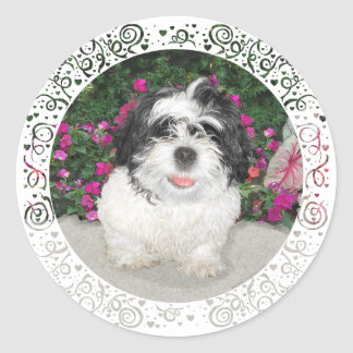Perro negro y blanco del rescate del perrito de pegatina redonda