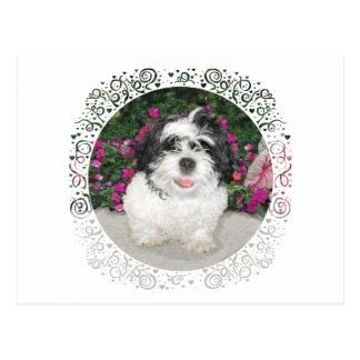 Perro negro y blanco del rescate del perrito de postal