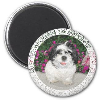 Perro negro y blanco del rescate del perrito de Sh Imán Redondo 5 Cm