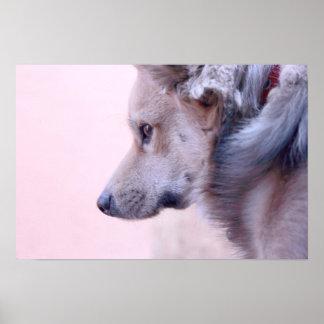 perro póster
