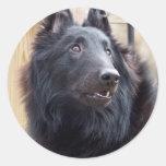 Perro pastor belga etiquetas redondas