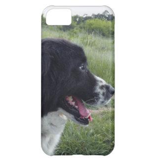 Perro pastor búlgaro