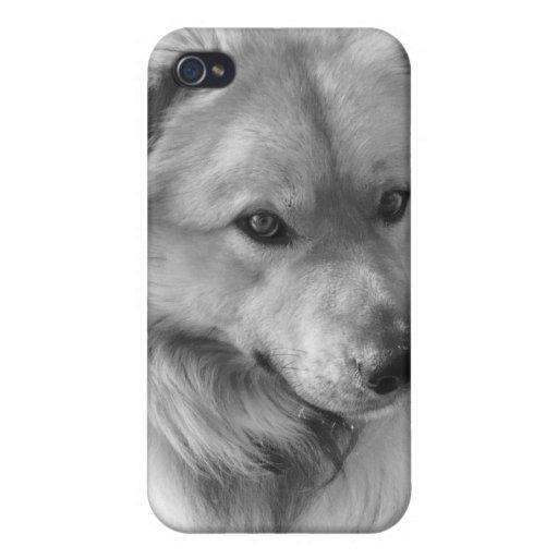 Perro pastor caucásico iPhone 4/4S fundas