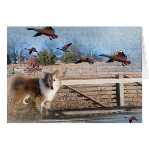 Perro pastor de Shetland a través del puente Felicitacion