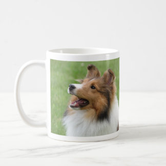 Perro pastor de Shetland en la taza