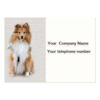 Perro pastor de Shetland, personalizado del perro  Tarjetas De Visita