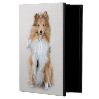 Perro pastor de Shetland, retrato lindo de la foto