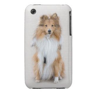 Perro pastor de Shetland, retrato lindo de la foto Funda Para iPhone 3 De Case-Mate