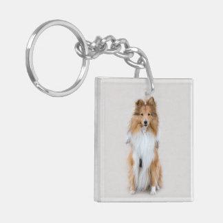 Perro pastor de Shetland, retrato lindo de la foto Llavero Cuadrado Acrílico A Doble Cara