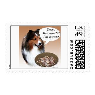 Perro pastor de Shetland (sable) Turquía Envio