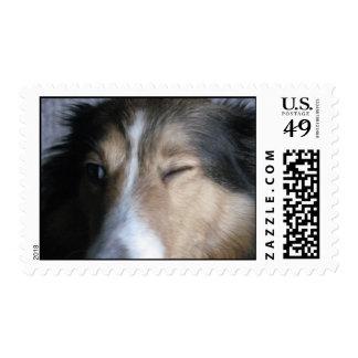 Perro pastor de Shetland Sellos