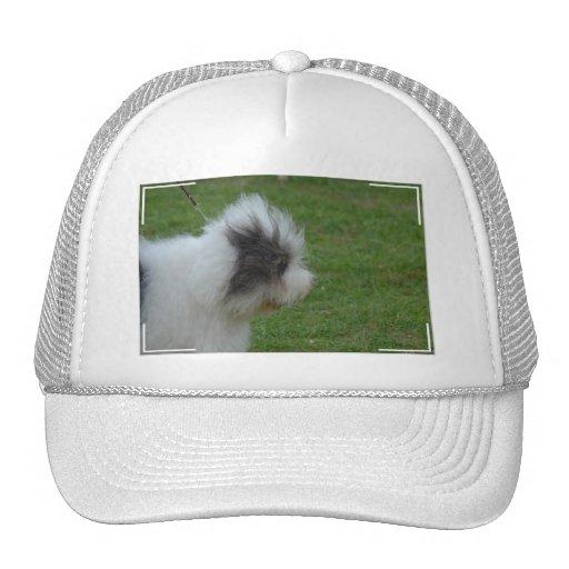 Perro pastor inglés viejo gorra