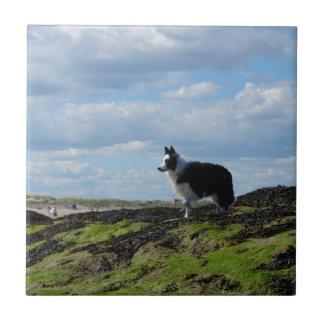 Perro pastor listo en rocas teja