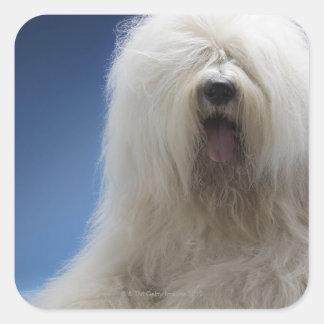 Perro pastor calcomania cuadradas personalizadas