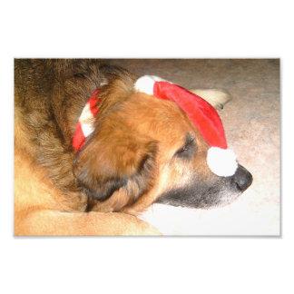 Perro pastor perro Divertido la navidad Christ Foto