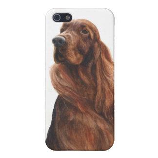 perro pedigrí de Irish Setter del caso del iPhone  iPhone 5 Fundas