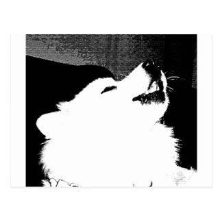 Perro peludo hermoso del blanco del samoyedo tarjetas postales