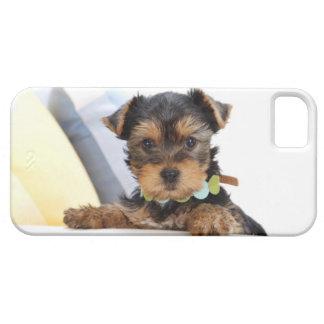 Perro pequeño, dulce iPhone 5 fundas