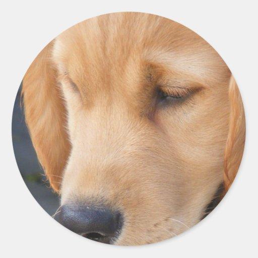Perro perdiguero Cara-De oro del perrito Pegatina Redonda