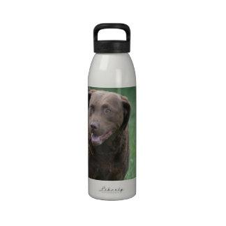 Perro perdiguero de bahía de Chesapeake Botallas De Agua