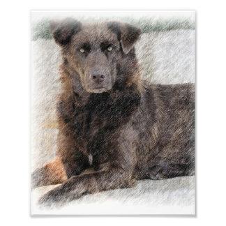 Perro perdiguero de bahía de Chesapeake Cojinete