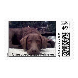 Perro perdiguero de bahía de Chesapeake Estampilla
