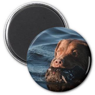 Perro perdiguero de bahía de Chesapeake Imán De Nevera