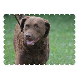 Perro perdiguero de bahía de Chesapeake Comunicados Personales