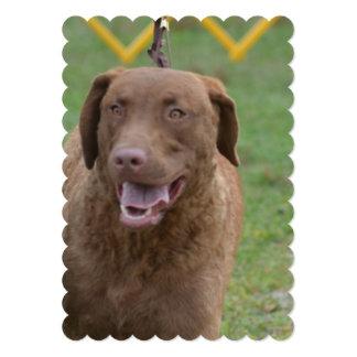 Perro perdiguero de bahía de Chesapeake lindo Comunicado Personalizado