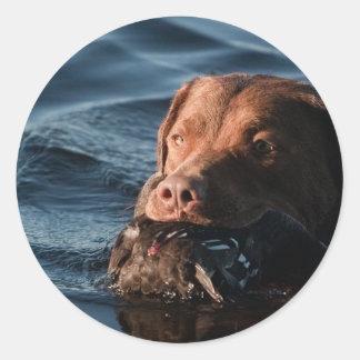 Perro perdiguero de bahía de Chesapeake Pegatina