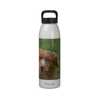 Perro perdiguero de Nueva Escocia Botella De Agua