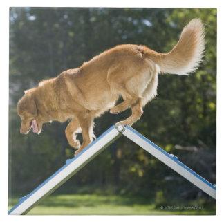 perro perdiguero pato-tocante de Nueva Escocia Azulejo Cuadrado Grande