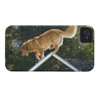 perro perdiguero pato-tocante de Nueva Escocia iPhone 4 Cobertura