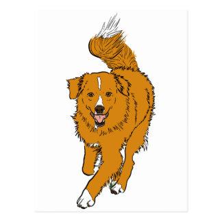 Perro perdiguero tocante del pato de Nueva Escocia Postales