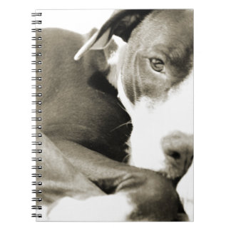 perro perezoso soñoliento lindo del pitbull libretas espirales