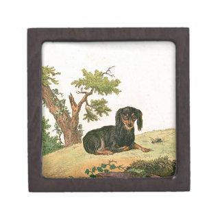 Perro - perro de aguas de juguete continental caja de regalo de calidad