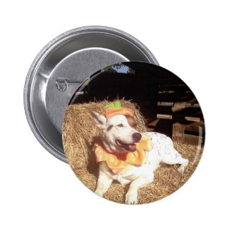 perro perro diversión Luna dice Halloween dive Pins