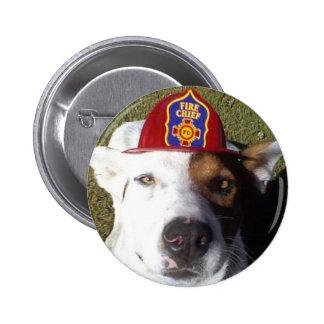 Perro perros divertidos diversión humor humor pin
