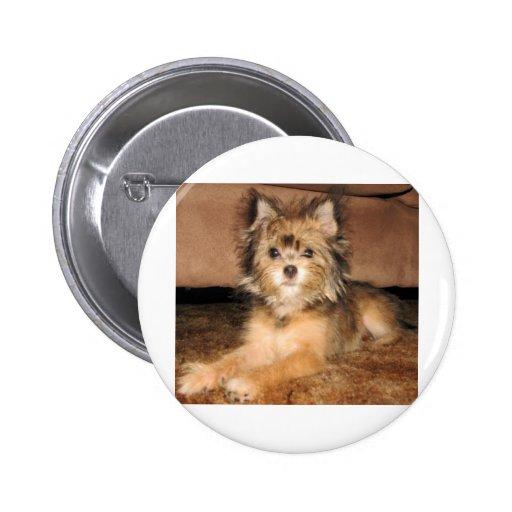 Perro Pin Redondo 5 Cm