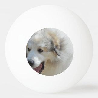 Perro pirenáico de la montaña pelota de tenis de mesa