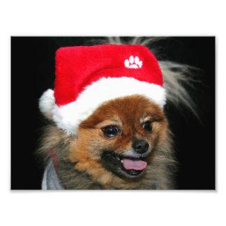 Perro pomeranian del navidad fotografia