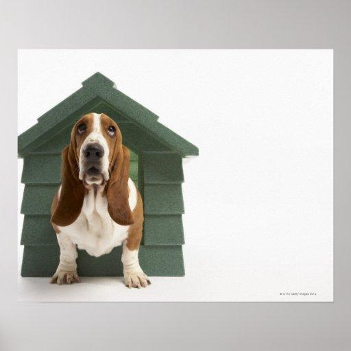 Perro por la caseta de perro póster